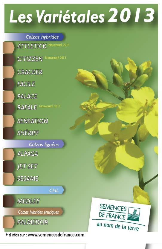 Variétales colza