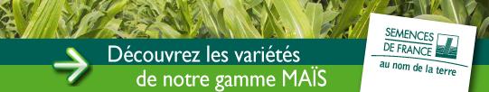 semences_de_france_boutons_gamme_mais