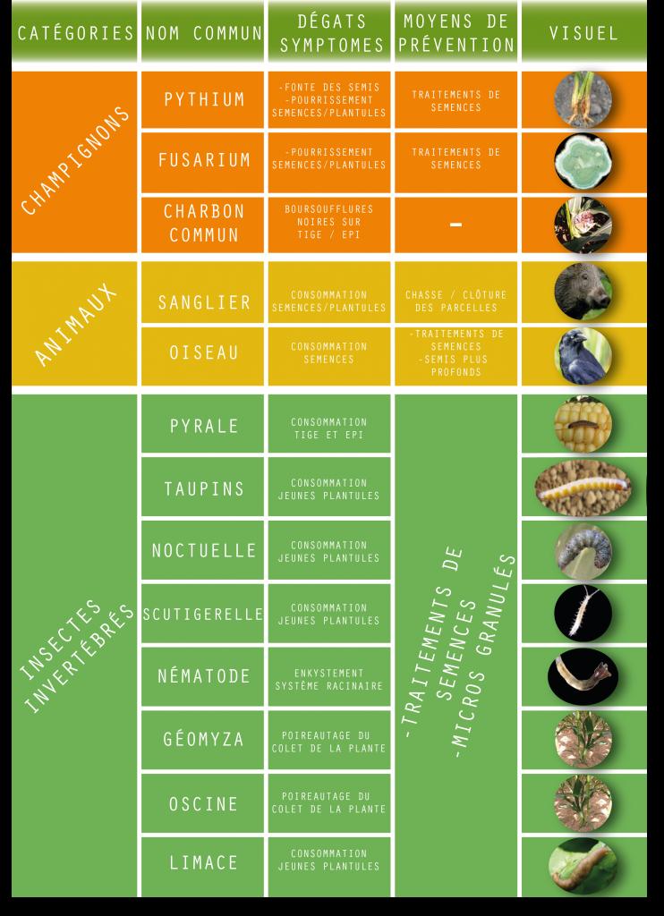 Les variétés du microorganisme végétal sur les pieds