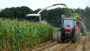 Nord Pas-de-Calais, Picardie - Résultats maïs 2015   Grain et ... f883854341
