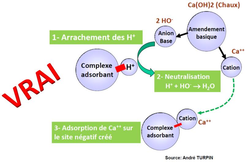 anion clacium
