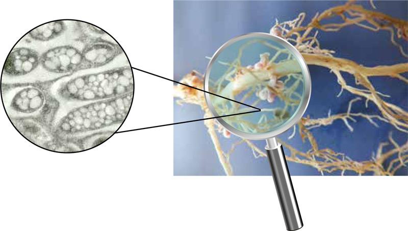 rhizactiv