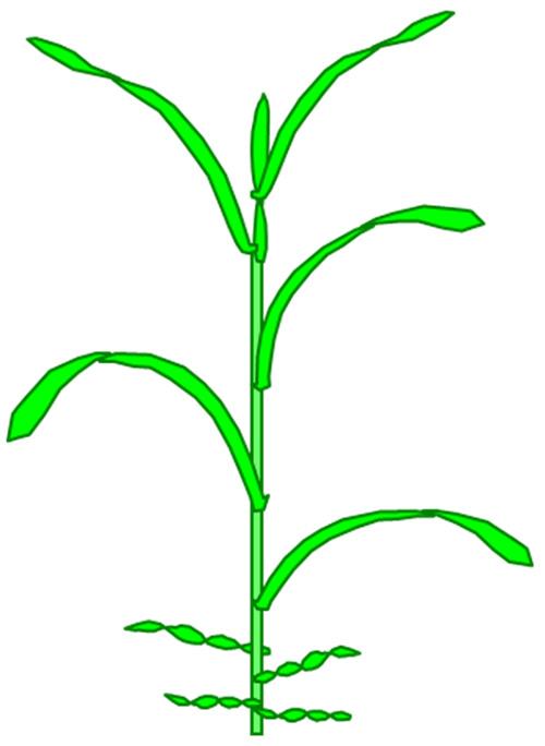 plante_schema6