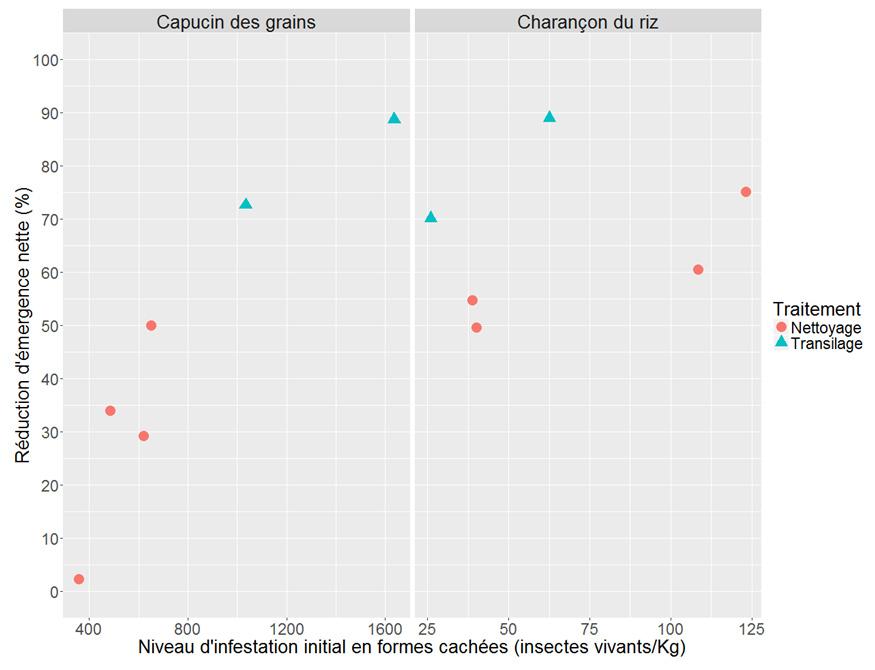 Le nettoyage des grains un outil efficace pour g rer les - Charancon du riz dangereux ...