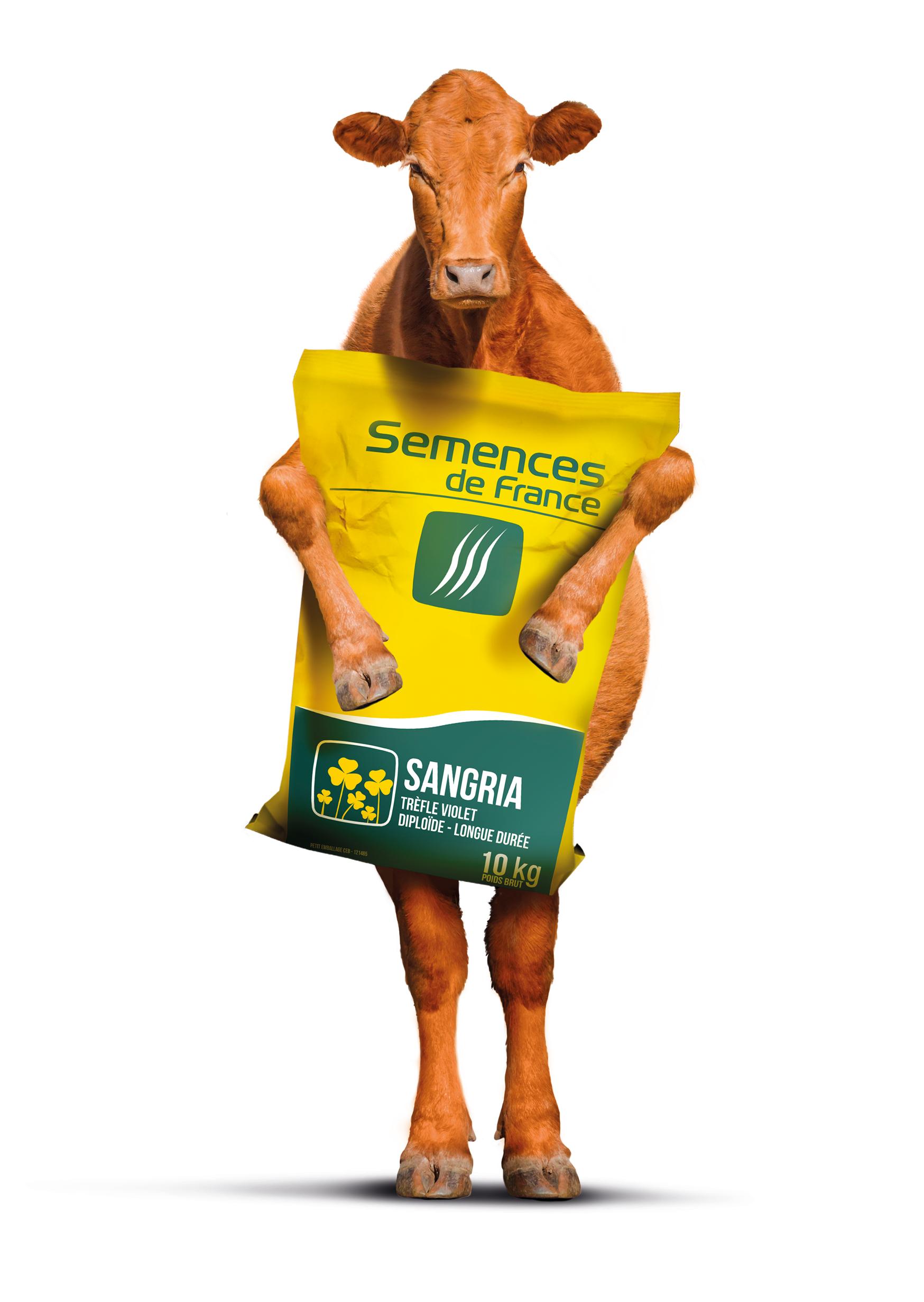 vache_sangria